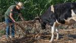 Consejos para una correcta alimentación del ganado - Noticias de nutricion