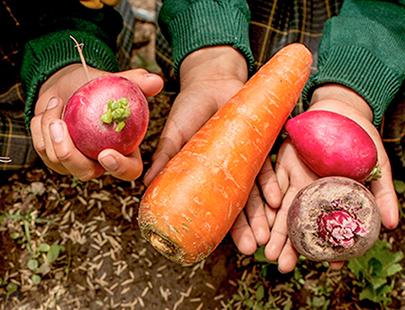 ¿Por qué promover la alimentación saludable en el Perú?