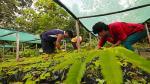Reforestación: ¿cómo poblar con vegetación nuestro entorno? - Noticias de vida sana