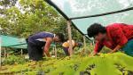 Reforestación: ¿cómo poblar con vegetación nuestro entorno? - Noticias de concurso público