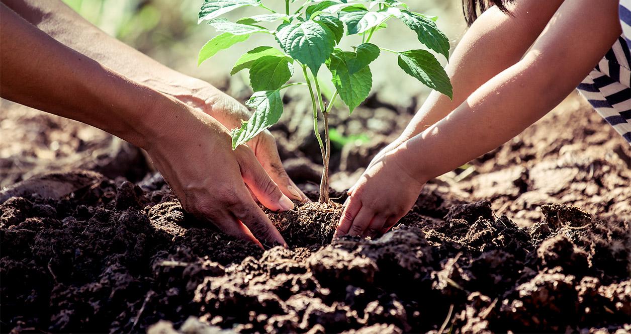 ¿Cuánto ayudan los árboles a las personas y al planeta?