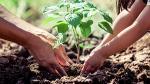 ¿Cuánto ayudan los árboles a las personas y al planeta? - Noticias de crisis climática