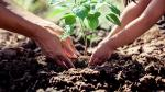 ¿Cuánto ayudan los árboles a las personas y al planeta? - Noticias de actividad física