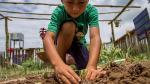 Compensar la huella de carbono: un compromiso con el medio ambiente - Noticias de invertir en perú